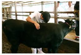 産業動物獣医師